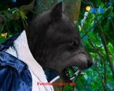 Raja Serigala GGS Episode 267