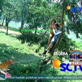 Daftar Nama Pemain Tarzan dan Zaenab